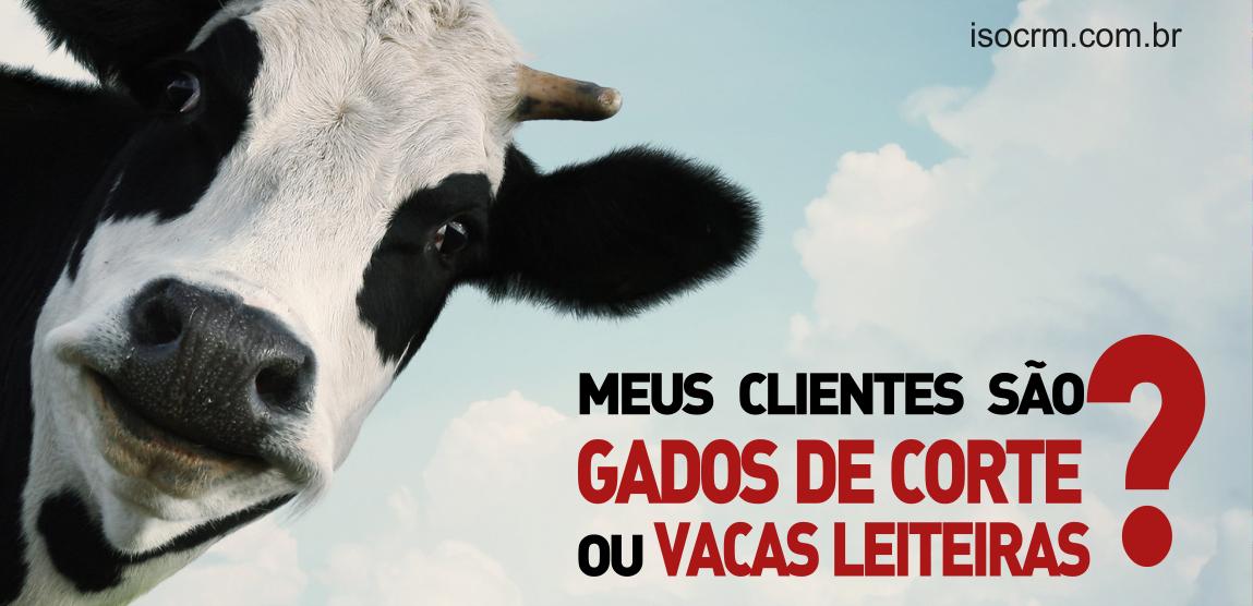 leiteira ou gado de corte BLOG